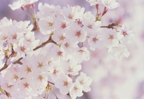 Шпалери гра кольору, квітучий сад