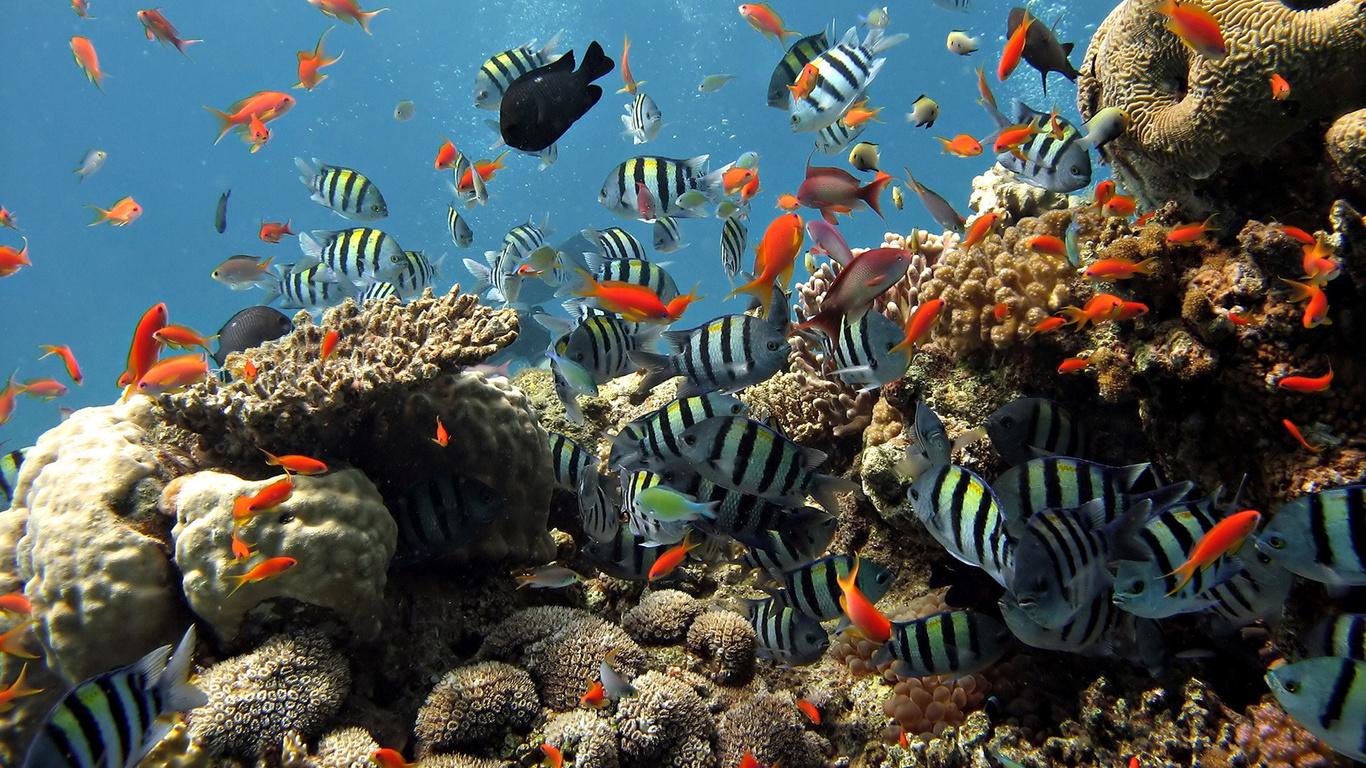 Подводный мир красные полосатые