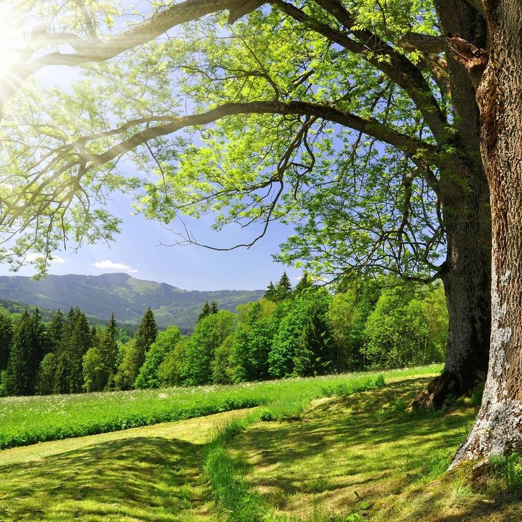 Hd sfondi boschi, una strada sterrata, alberi, bellissimi paesaggi