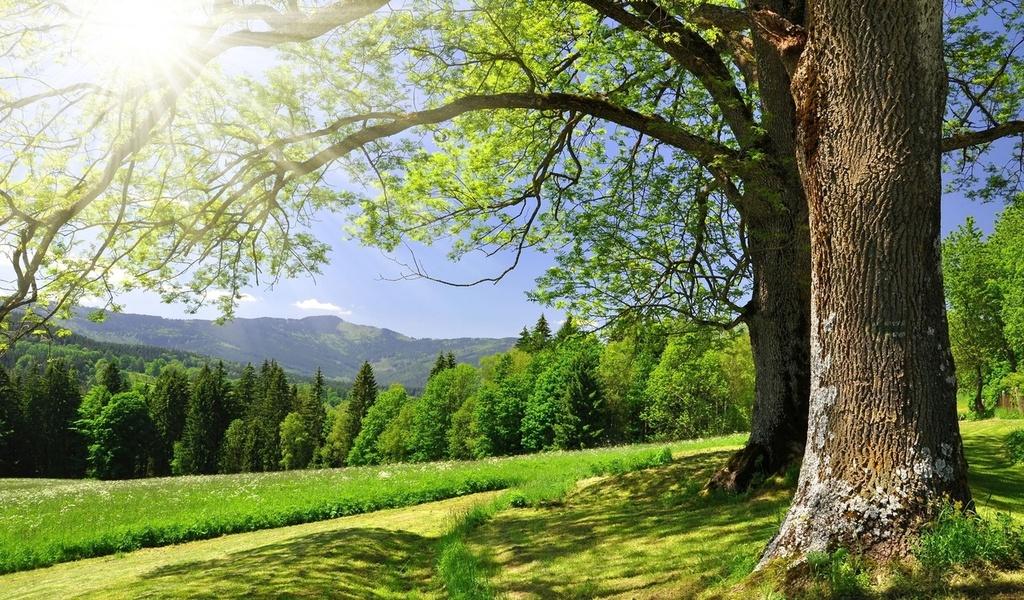 HD Fondos de pantalla bosque, un camino de tierra, árboles, paisaje ...