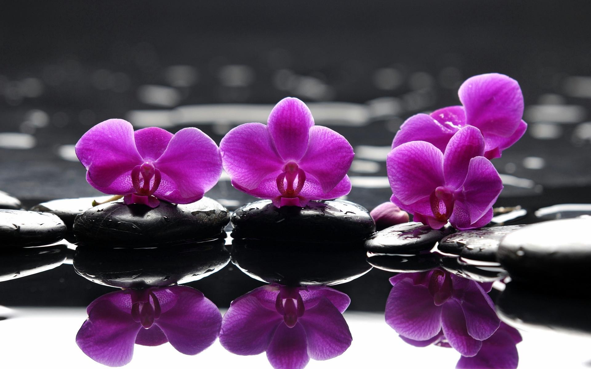 HD Fondos de pantalla de spa, flores moradas, piedras, flores, Spa ...